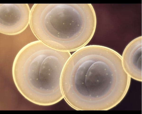 A screenshot taken from an animation showing the structure of multiple-resistant staphylococcus aureus (MRSA).
