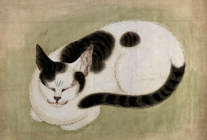 An image of a Japanese guache painting entitled A Sleeping Cat.